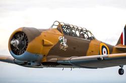 warbird-harvard-250